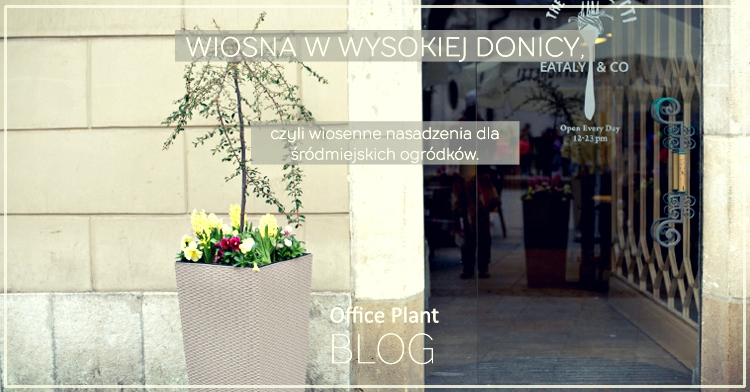 WOffice Plant Blog_wiosenne donice 2017
