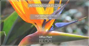 Office Plant Blog_afrykanska flora